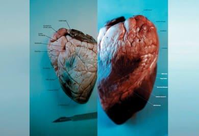 MacUser_heart